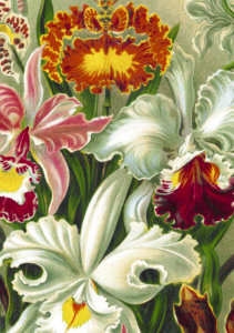 Full color image of a color separated flower painting